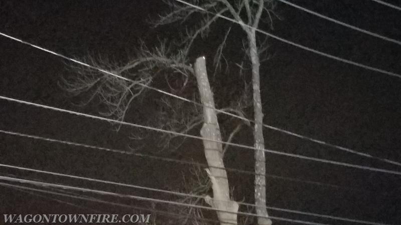 Tree burning on Beacon Light
